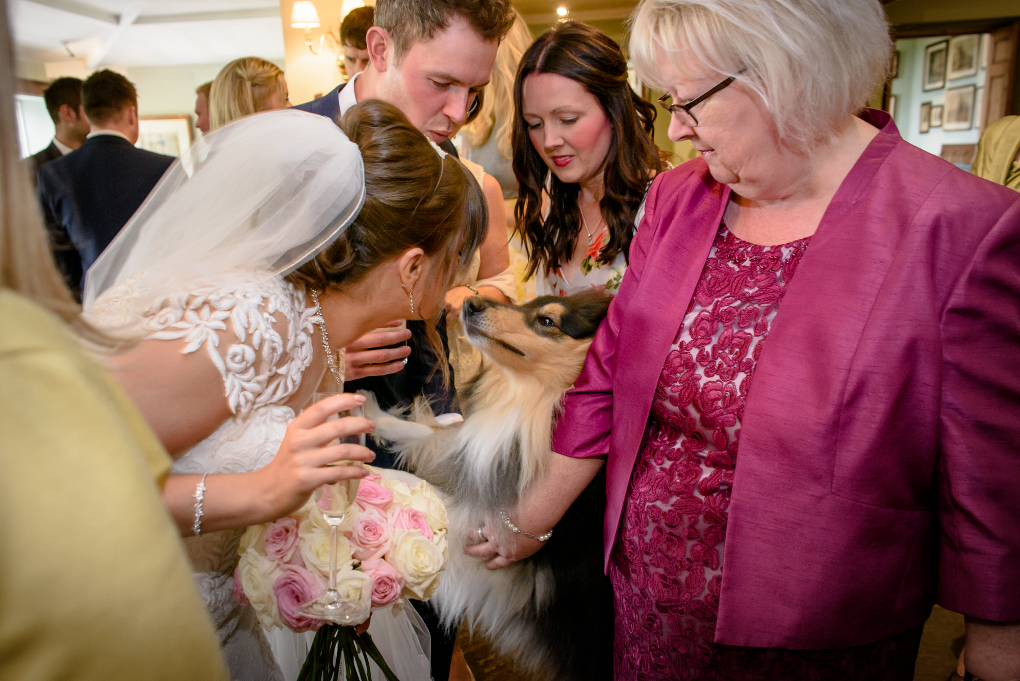 Brid welcome her dog at the wedding