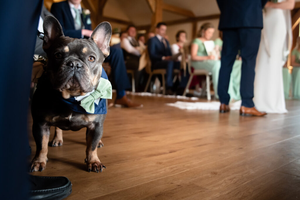 Dog at the ceremony