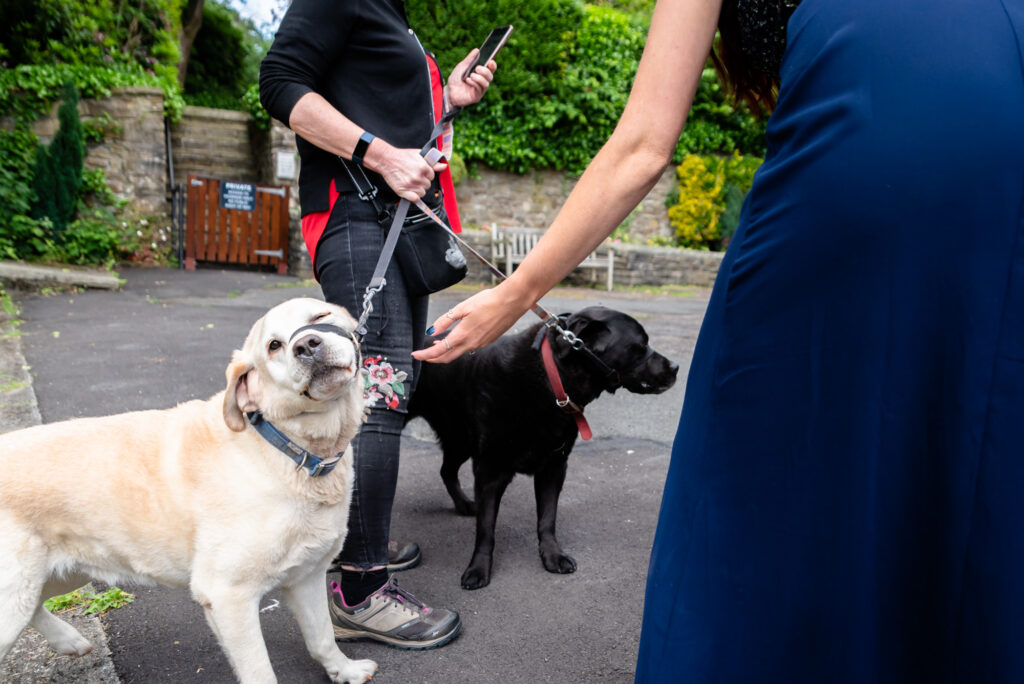 Dog refusing a stroke from the bridemaid