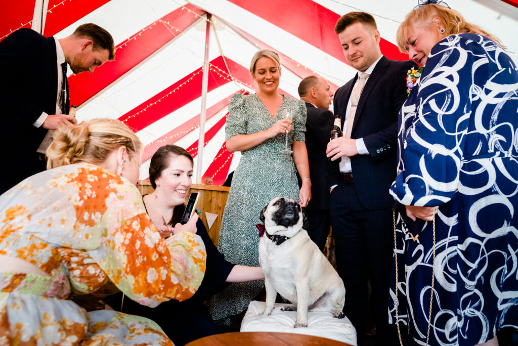 Dog being fussed by the guests