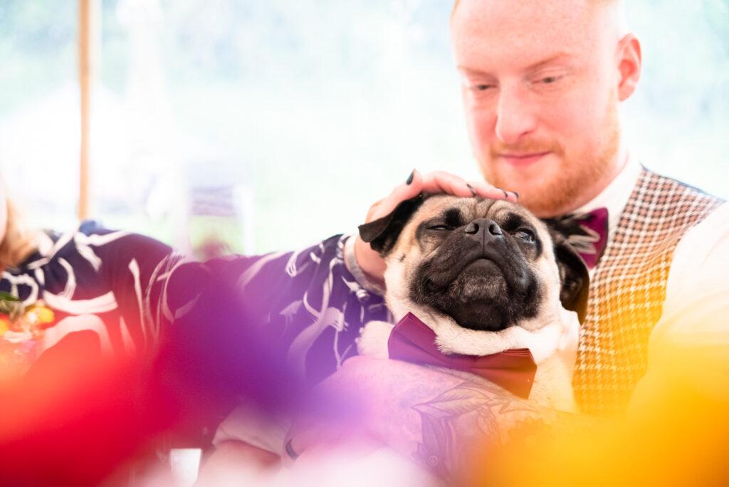 Dog sitting on groom during the speeches at Gisburn Park Estate